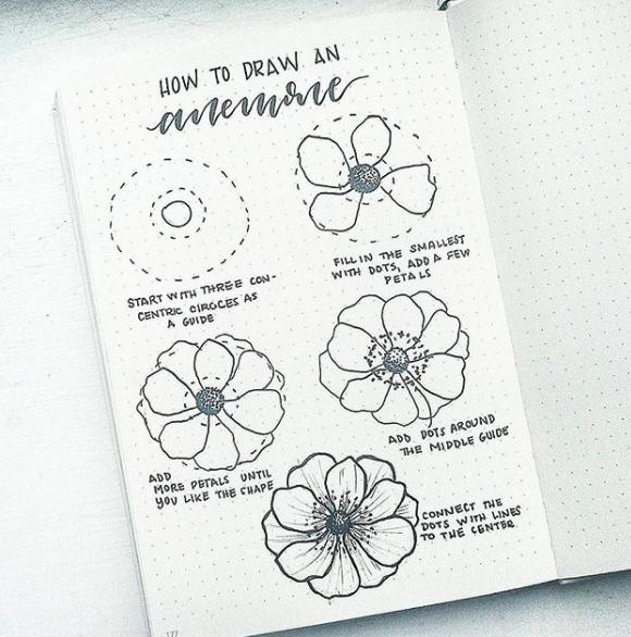 anemone-bonjournal