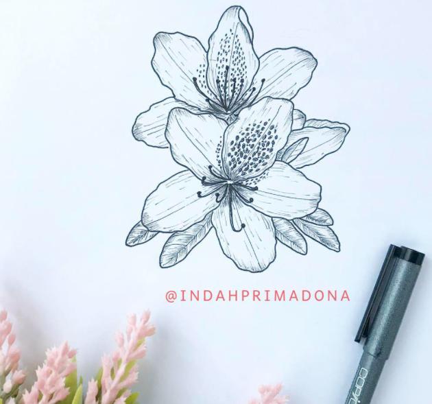 azalea-india