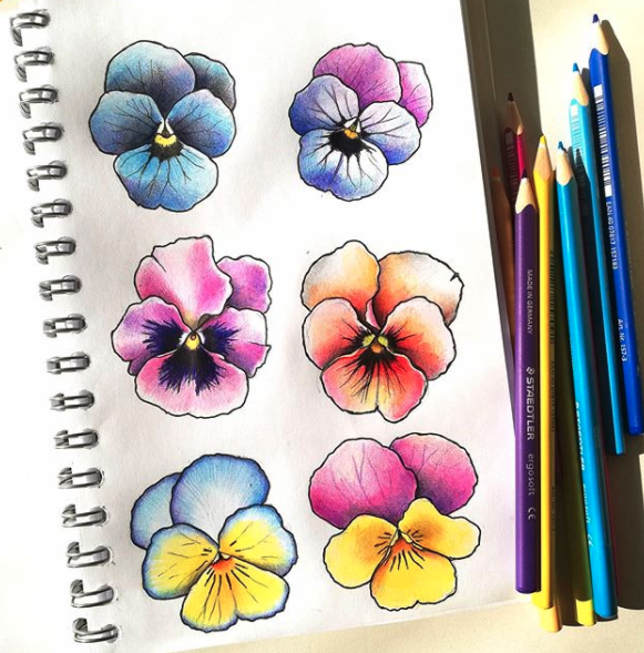 coloful-pansy-flowers-kd-colouring