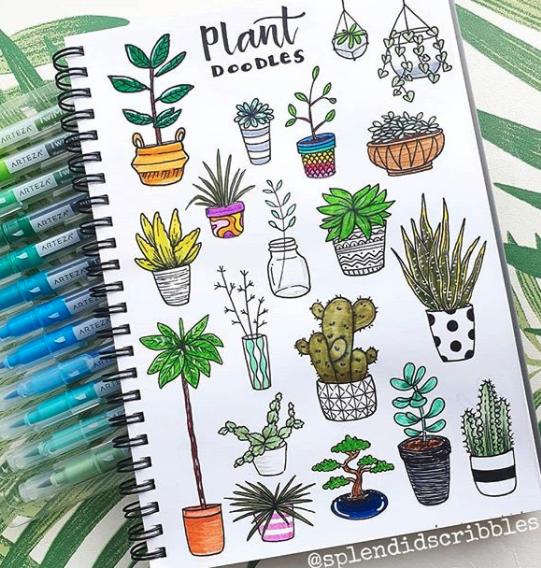 house plants-splended scribbles