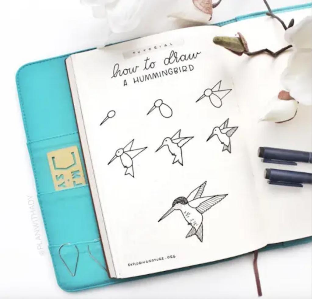hummingbird doodles