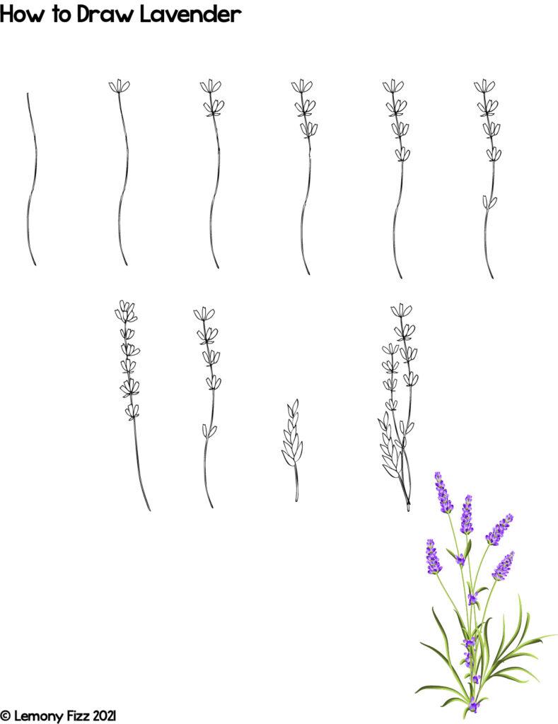 how-to-draw-lavender-lemony-fizz